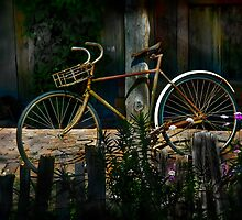 The Queen of Bicycles by Manfred Belau