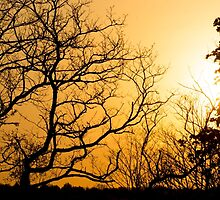 Afternoon Silhouette  by JoeGeraci