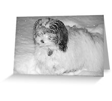 Let it Snow, Let it Snow, Let it Snow... Greeting Card