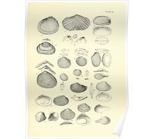 Manual of the New Zealand Mollusca by Henry Sutter 1915 0225 AngaMyllita Verticordia Poster