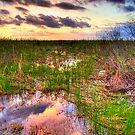 Everglades Twilight by njordphoto