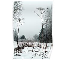Scenery in winter Poster