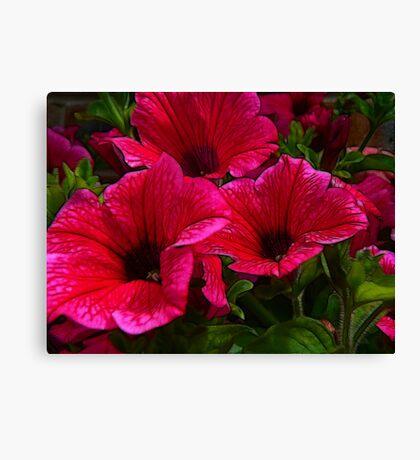Fractalius Petunias Canvas Print