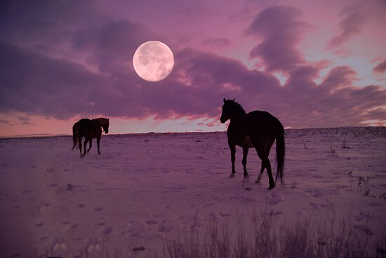 Sunrise Moon Walk  by Judy Grant