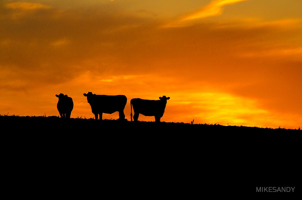 THREE AMIGOS by MIKESANDY