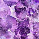 "Purple Lemon Balm featured in ""Around The  World"" by ©The Creative  Minds"