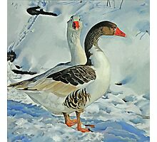 Geese in Snow - 1 Photographic Print