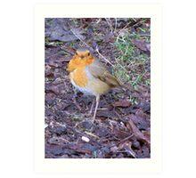 Ragged Robin Art Print