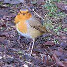 Ragged Robin by Sharon Perrett