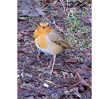 Ragged Robin Photographic Print