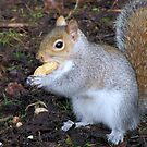 S is for nut too by Sharon Perrett