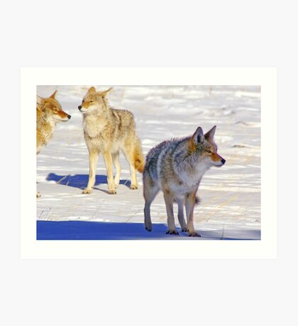 The Pack Alpha Art Print