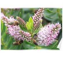 Floral Bee Poster