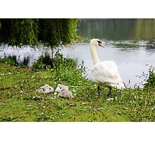 Mama and Babies Photographic Print