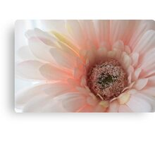 Soft pink and gentle Canvas Print