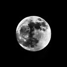 luna (29.1.10) by SNAPPYDAVE