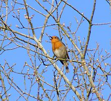 Sing from the highest tree by Gerry  Temple