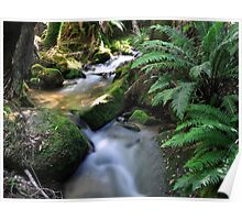 Tasmanian river  Poster