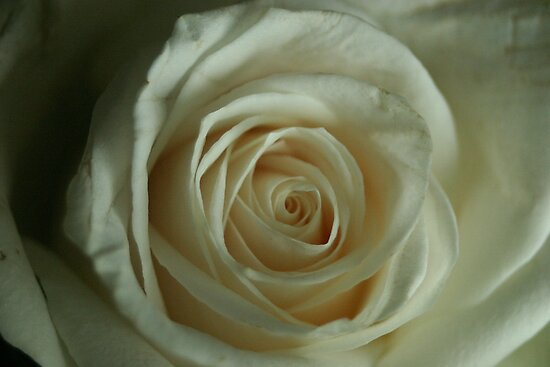 A Rose by any other name by Julie Tomkins