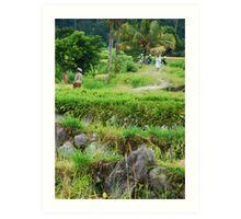 Balinese rural scene Art Print