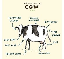 Anatomy of a Cow Photographic Print