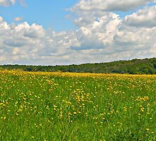 Buttercup Meadow by ColinBoylett