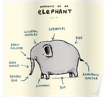 Anatomy of an Elephant Poster