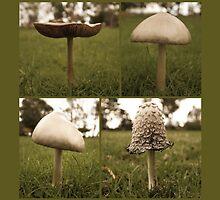 Mushroom Me by Emma Holmes