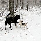 Oucchhhhhhh, You Big Lug!!!!!!!!! 1-29-2010 by NatureGreeting Cards ©ccwri