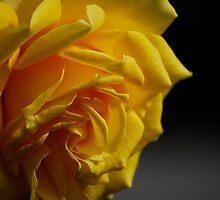 Sunshine Captured: Yellow Rose by Sevenish