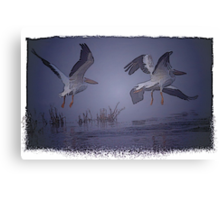 White Pelicans In The Fog Canvas Print