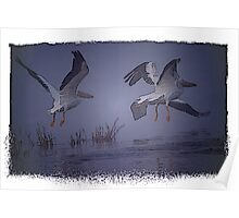 White Pelicans In The Fog Poster