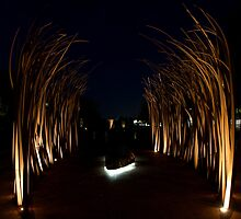 Iron Forest - Canberra Australia. by Joseph O'R.