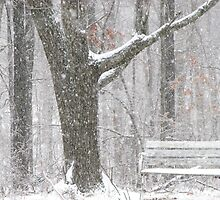 Porch/ Forest Swing?? by NatureGreeting Cards ©ccwri