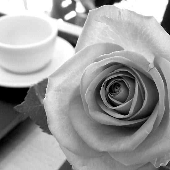 Rose by mattslinn