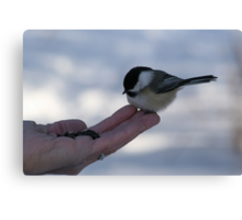Over Here...Miss Chickadee Canvas Print