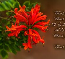 Trumpet Creeper (Pyrostegia) by bellecards