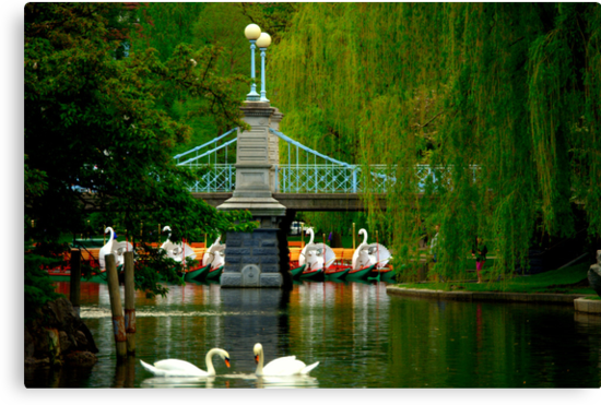The Swans and Swan Boats by Monica M. Scanlan