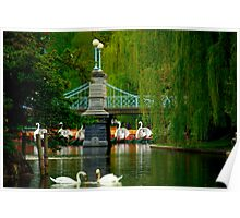 The Swans and Swan Boats Poster
