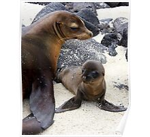 Mum and Pup (Galapagos Islands) Poster