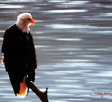 The Eagle Awaits... by Pam Moore