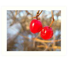 Bright Berries Art Print