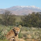 Inverdoorn- South Africa by Linda Holcombe