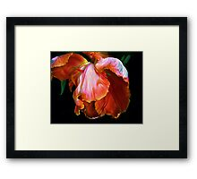 Petal Play Framed Print