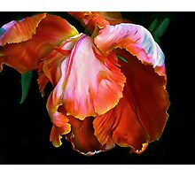 Petal Play Photographic Print