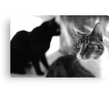Centre of attention (B&W) Canvas Print