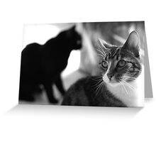 Centre of attention (B&W) Greeting Card