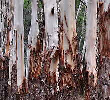 The Australian Gum Tree by Bev Woodman