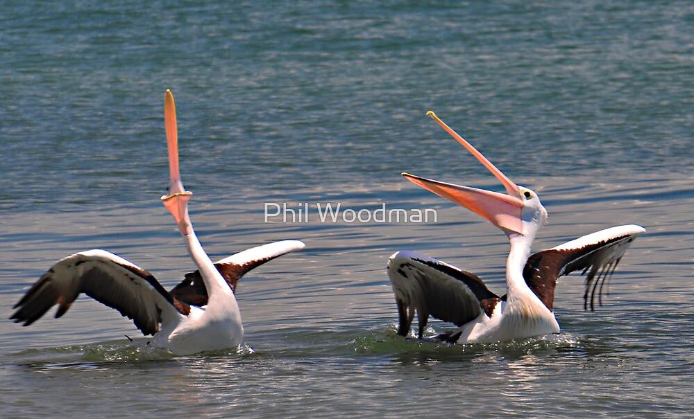 Phil Woodman's Pelican Joke! by Phil Woodman