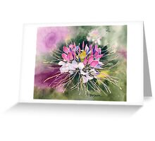 Cleome Blossom Watercolor Greeting Card